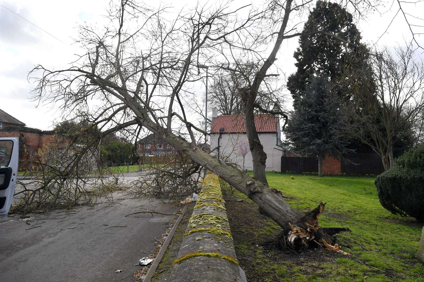 Fallen tree on Elm Avenue, Newark, blocking the road.. (7754445)