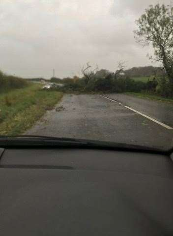 A tree is blocking a road near Southwell. (21637032)