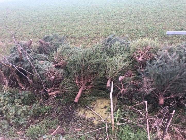 The flytipped Christmas trees at Averham. (26316989)